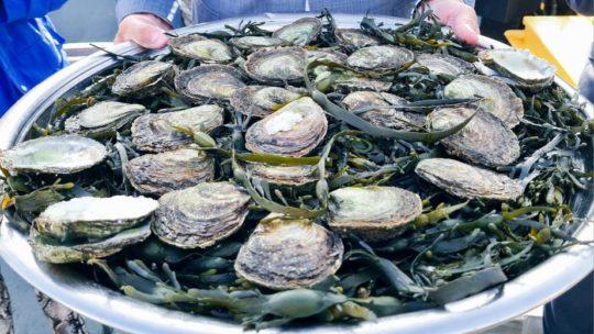 Het nieuwe oesterseizoen is smakelijk geopend!