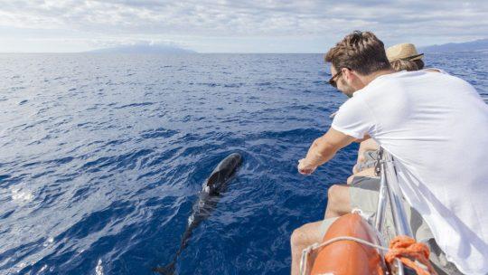 Kust van Tenerife benoemd tot eerste Europese 'Whale Heritage Site'